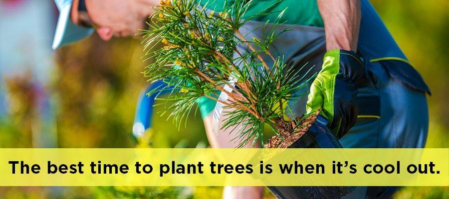 Best Time to Plant Privacy Trees