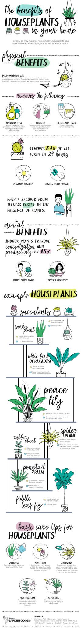 The Benefits of Houseplants in Your Home